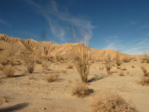 mojave landscapeIMG_9464
